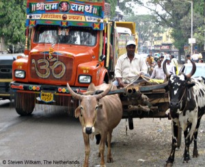 sindhi every where use bullock cart